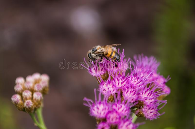 Selective Focus Photography of Bee on Purple Petaled Flower stock photo