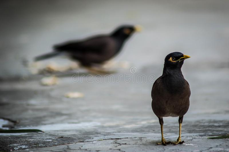 Selective Focus Photography of Black Bird on Gray Pavements stock image