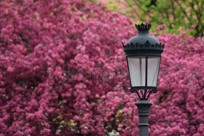 Selective Focus Photography of Black Lamp Post stock photography