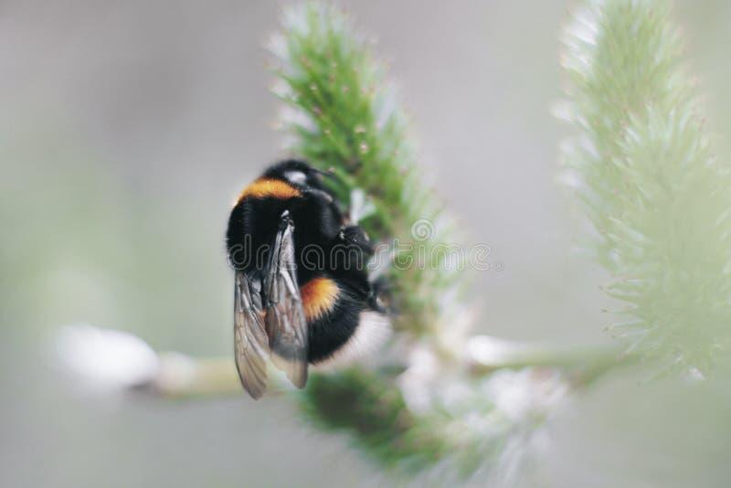 Selective Focus Photography of Black and Yellow Carpenter Bee stock photos