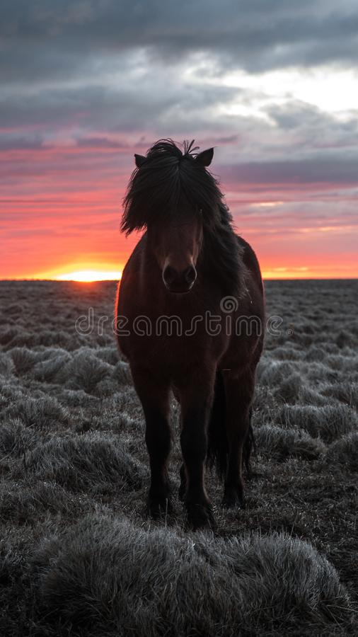 Selective Focus Photography of Brown Horse royalty free stock photos