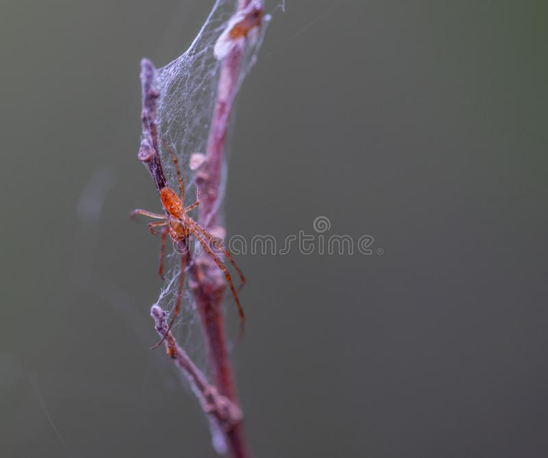 Selective Focus Photography of Brown Spider Perched on Brown Plant Stem royalty free stock photo
