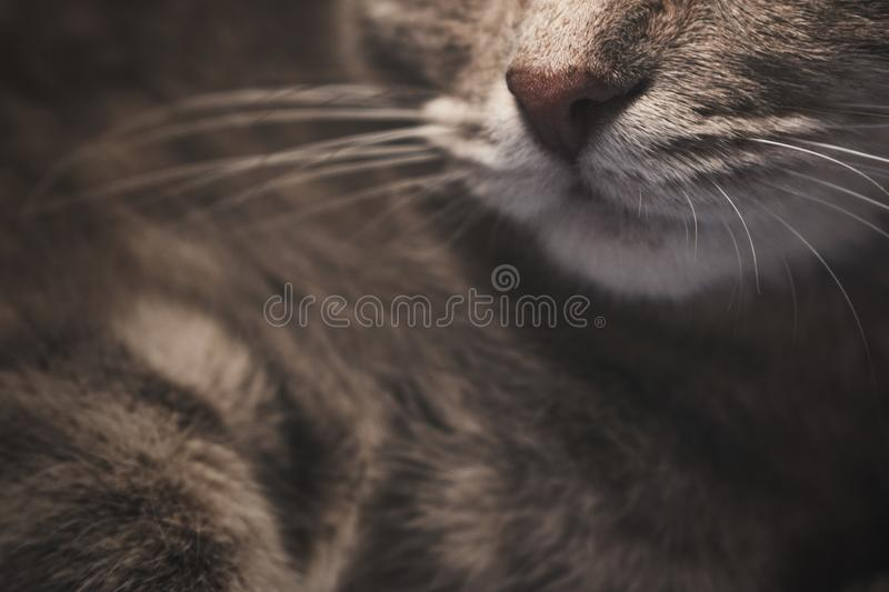 Selective Focus Photography of Brown Tabby Cat stock photo