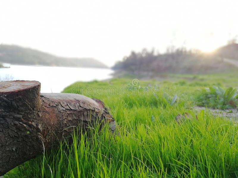 Selective Focus Photography of Brown Tree Trunk Near Green Grass Field royalty free stock images