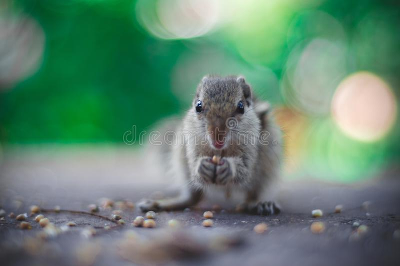 Selective Focus Photography of Gray Squirrel Holding Seeds stock photo