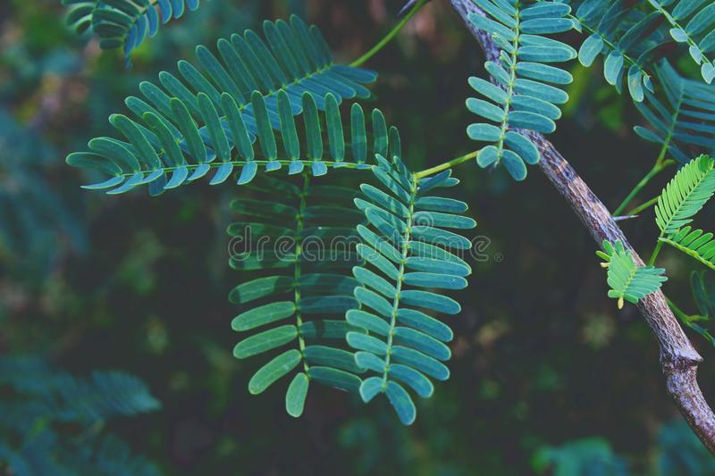 Selective Focus Photography of Green Fern Plant stock photography