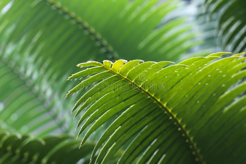 Selective Focus Photography Of Green Leaf Free Public Domain Cc0 Image