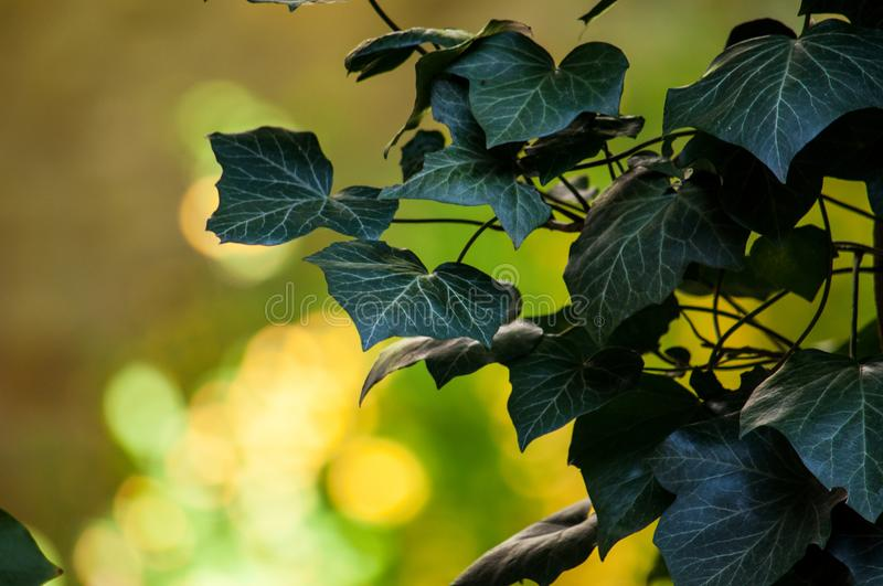 Selective-focus Photography of Green Leaf Plant royalty free stock photography