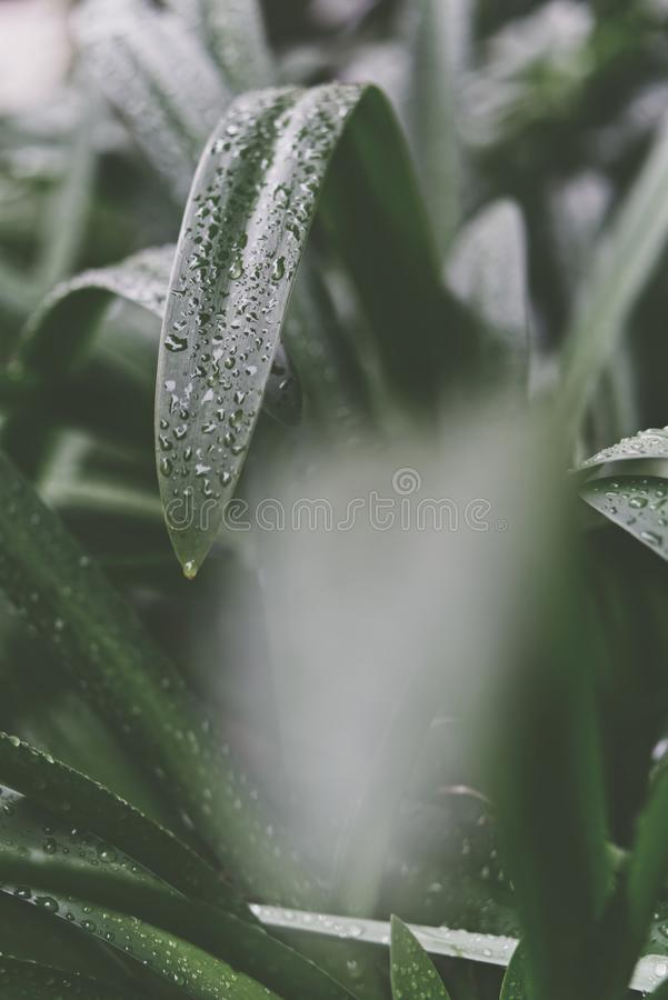 Selective Focus Photography Of Green Leaf Plant royalty free stock image