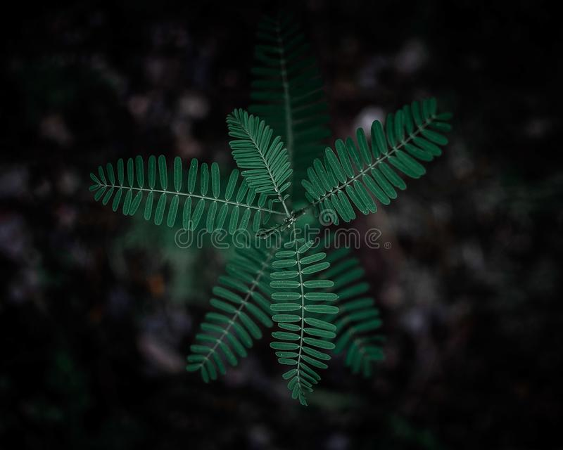Selective Focus Photography of Green Leafy Plant stock image