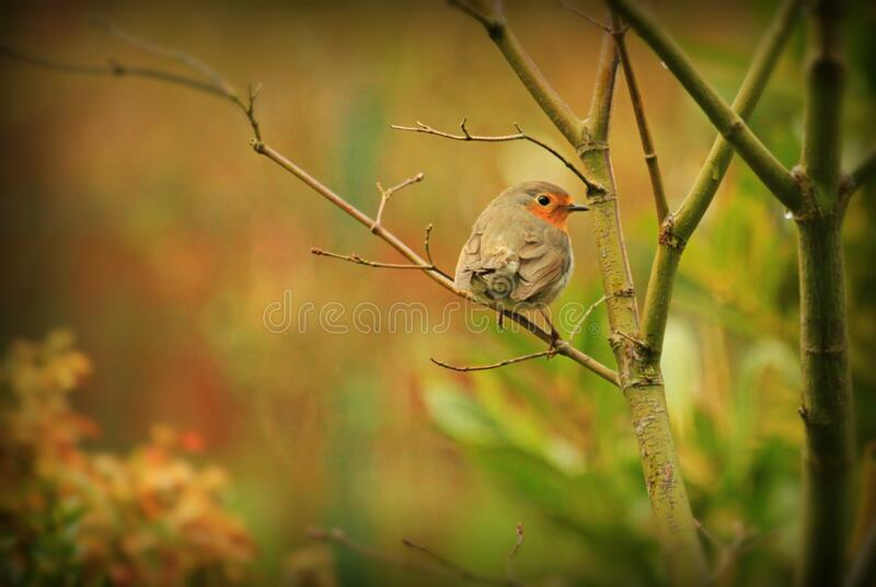 Selective Focus Photography of Grey Bird in Tree Branch stock image