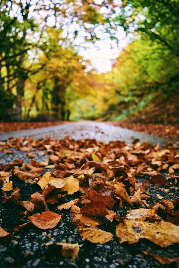 Selective Focus Photography Of Leaves On Road Free Public Domain Cc0 Image