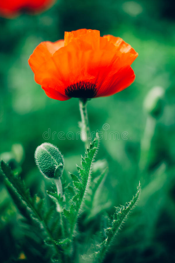 Selective Focus Photography Of Orange Petaled Flower Free Public Domain Cc0 Image