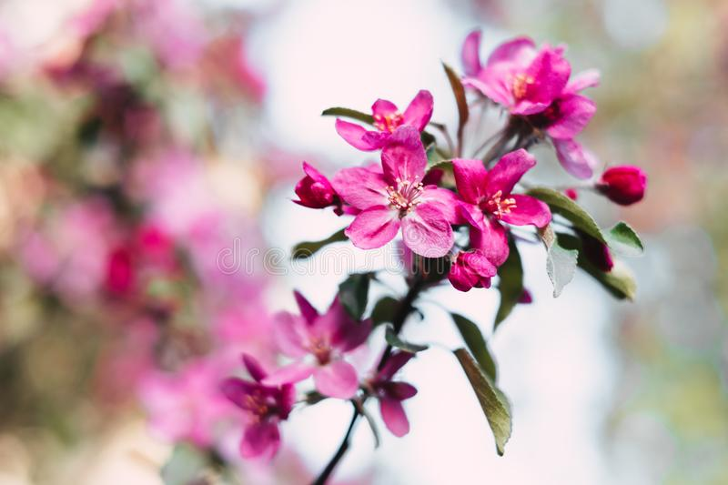 Selective Focus Photography of Pink Petal Flower royalty free stock photo