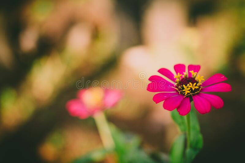 Selective Focus Photography Of Pink Petaled Flower During Daytime Free Public Domain Cc0 Image