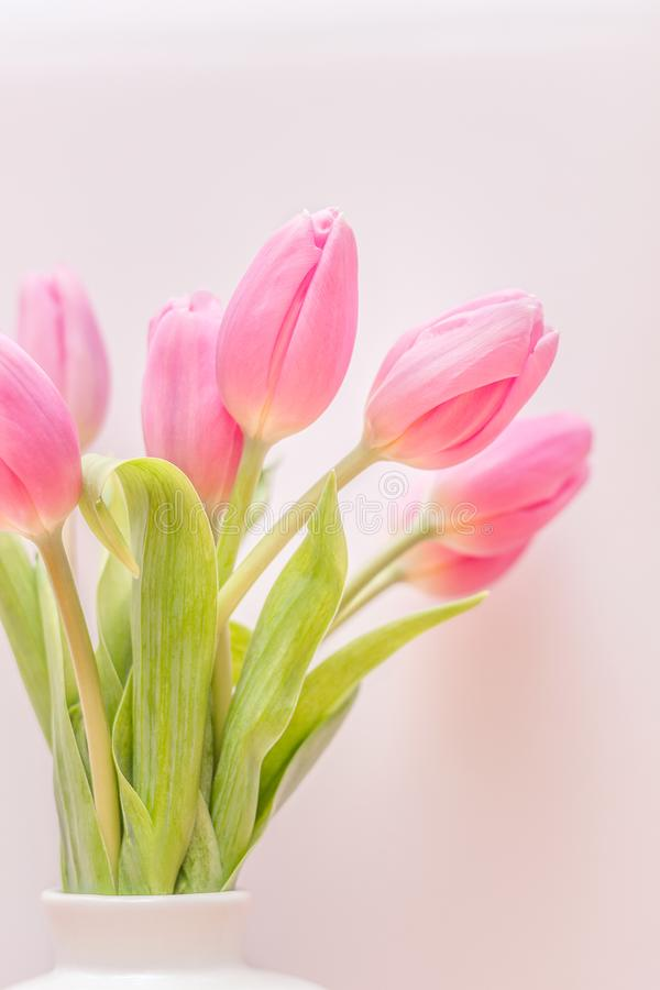 Selective Focus Photography of Pink Tulip Flower Arrangement stock photography