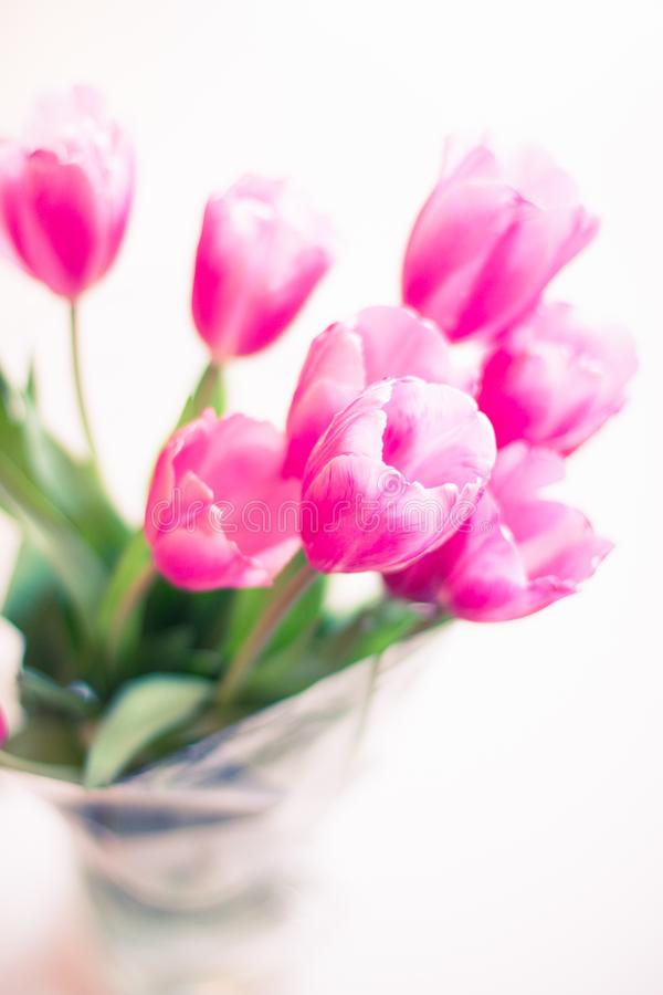 Selective Focus Photography of Pink Tulip Flowers stock photos