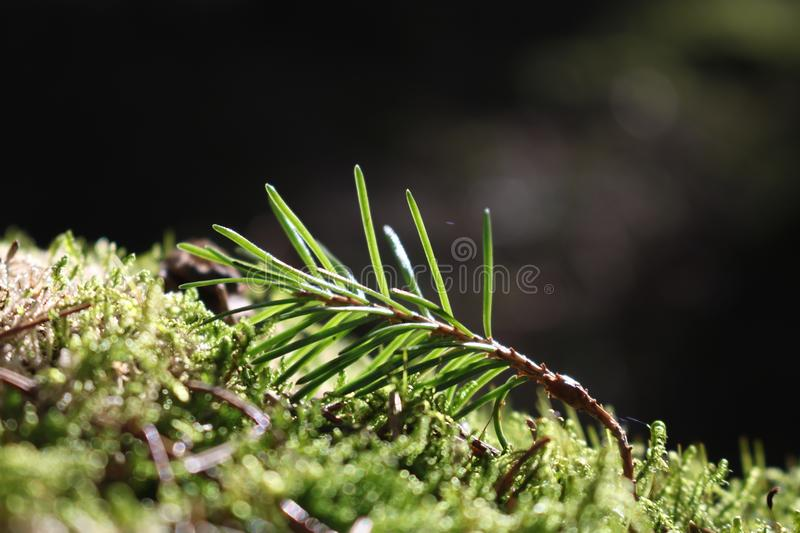 Selective Focus Photography of Plant royalty free stock image