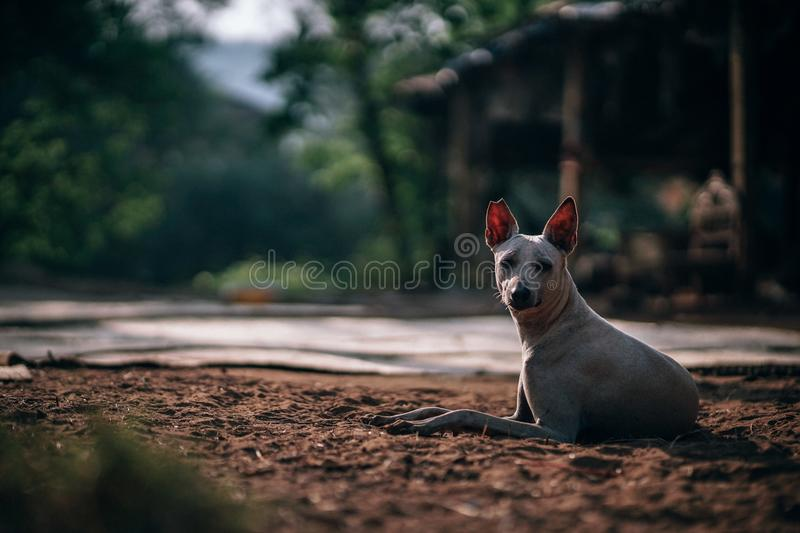 Selective Focus Photography Of Short-coated Dog Free Public Domain Cc0 Image