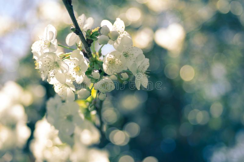 Selective Focus Photography of White Blossoms stock images