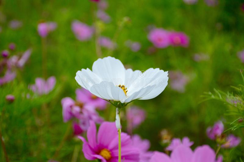 Selective Focus Photography of White Petaled Flower stock photography
