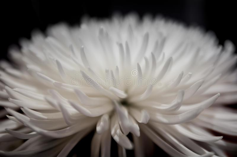 Selective Focus Photography of White Petaled Flower stock images