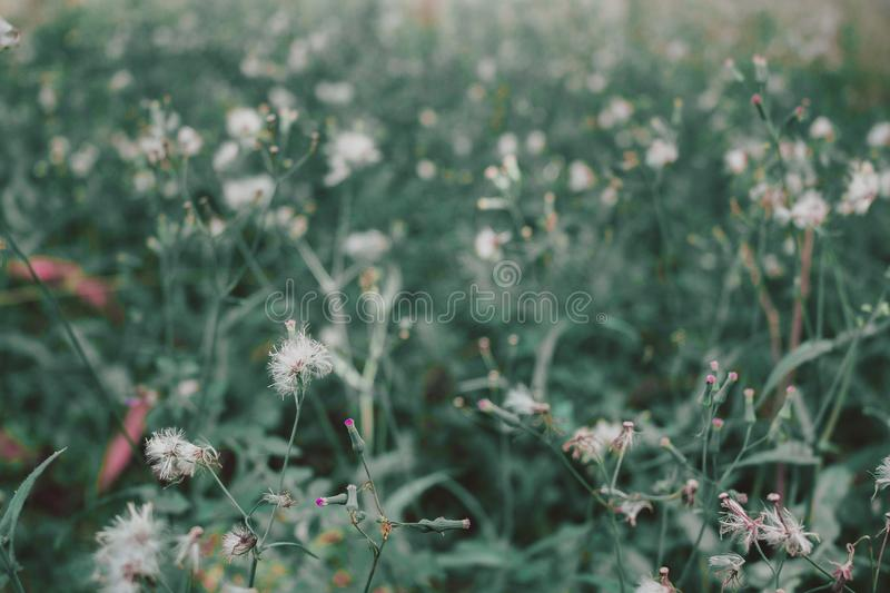 Selective Focus Photography of White Petaled Flower royalty free stock photo
