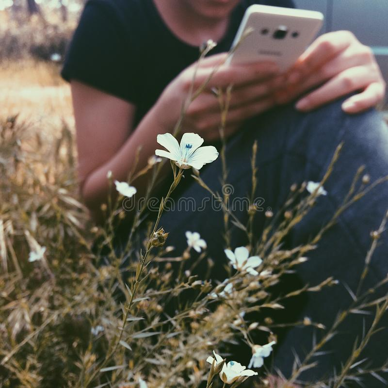 Selective Focus Photography of White Petaled Flowers Near Woman Holding Smartphone royalty free stock image