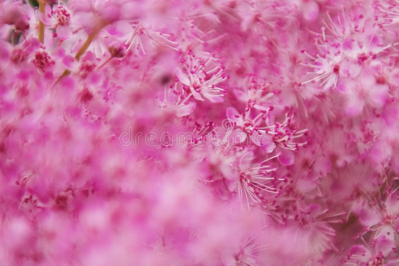 Selective Focus Photography of White And Pink Flowers stock photo