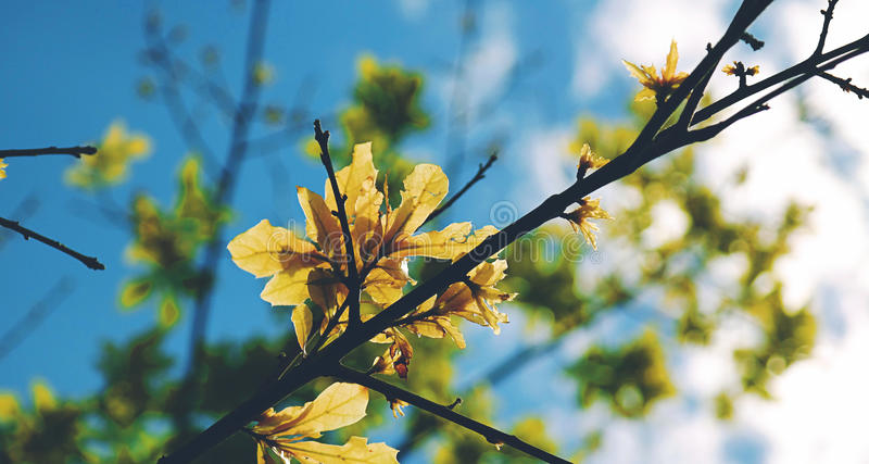 Selective Focus Photography Of Yellow Leaf Tree During Daytime Under Blue Sky Free Public Domain Cc0 Image