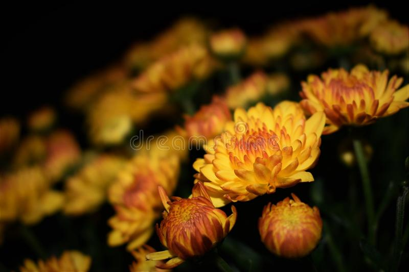 Selective Focus Photography of Yellow Petaled Flower stock photo