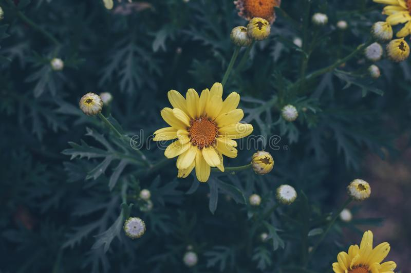 Selective Focus Photography of Yellow Petaled Flower stock photography