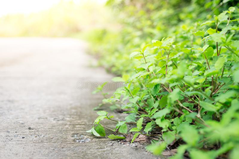 Selective focus of Roadside shrubs stock photography