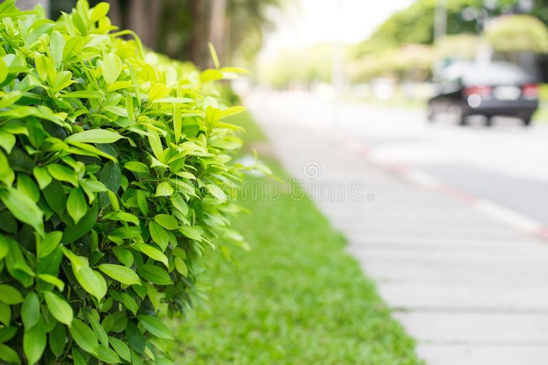 Selective focus of Roadside shrubs royalty free stock photos