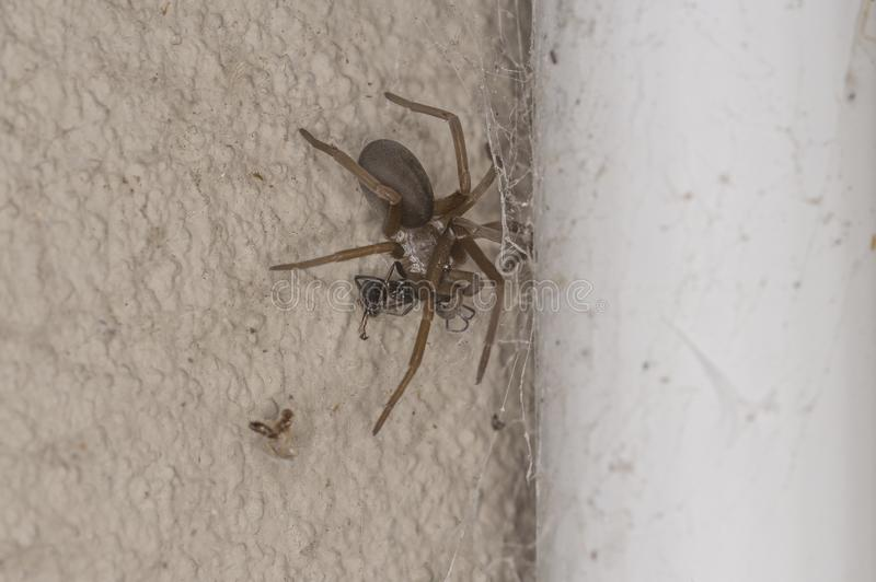 Selective focus shot of a spider in the corner of a wall stock photos
