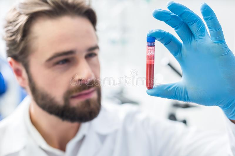 Selective focus of a test tube with blood royalty free stock photo