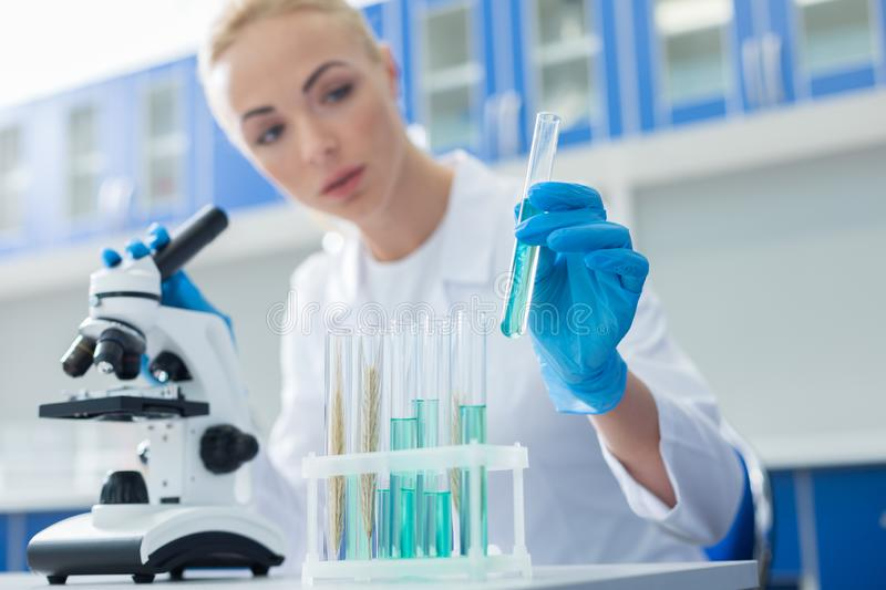 Selective focus of test tubes with blue reagents stock images