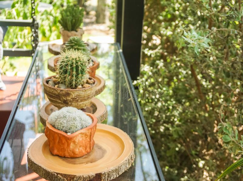 tiny cactus in pots for house decoration royalty free stock images