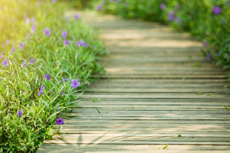 Selective focus to wooden bridge and side blossom purple flower royalty free stock photo