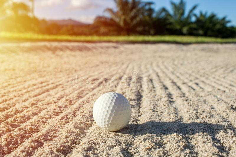 Selective focus white golf ball on the sand bunker with green field stock photography