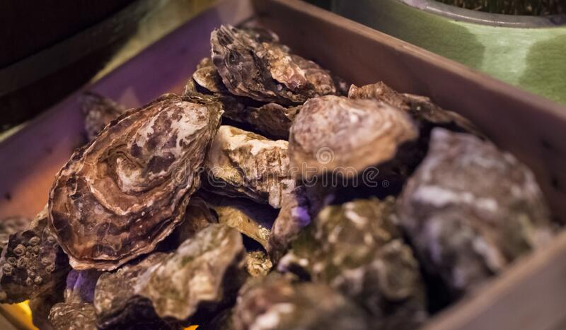 Selective Focused Thai Fresh Seafood: fresh delicious oysters, normally eaten raw with squeezed lime juice or chili paste. Nutrition, Food , Cuisine, Thai stock photo