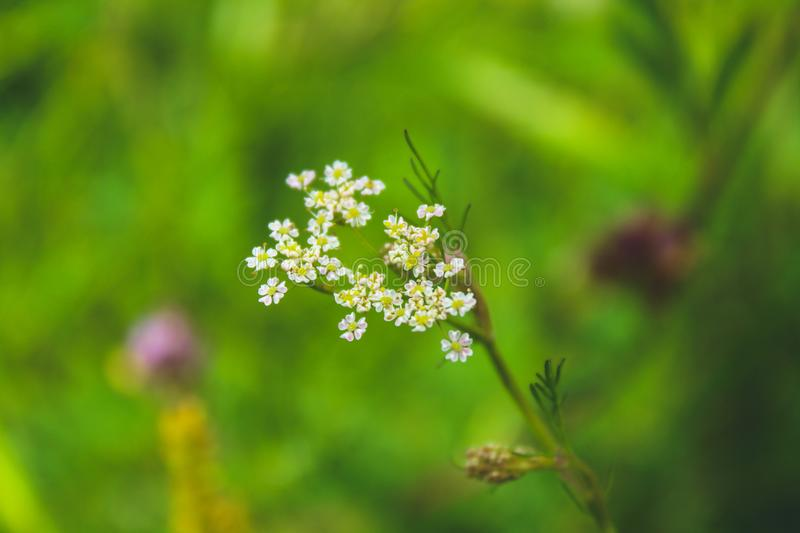 Selective Focused of White Petaled Flower royalty free stock photos
