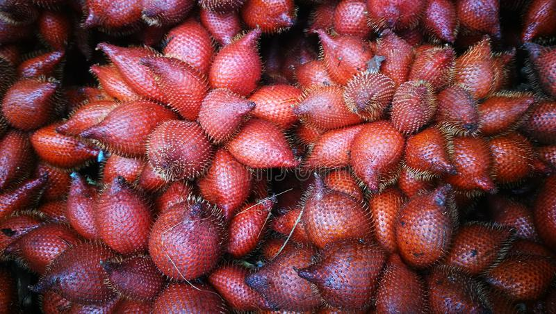 Selective focusing on bunch of Salacca or Snake fruit; the tropical fruit of South East Asia stock photo