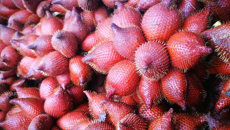 Selective focusing on bunch of Salacca or Snake fruit; the tropical fruit of South East Asia royalty free stock images