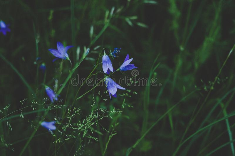 Selective Photo Of Blue And White Petaled Flower royalty free stock photo