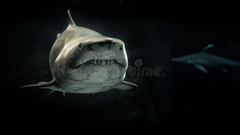Selective Photo of Gray Shark stock photo