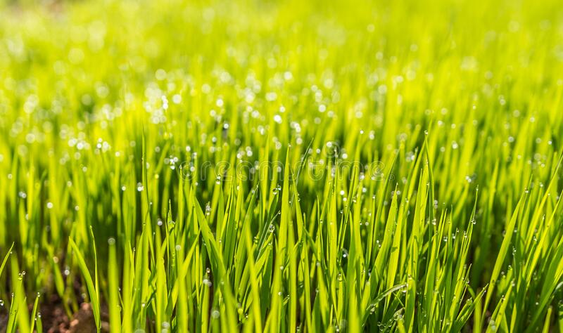 Selective Photo Of Green Grass Free Public Domain Cc0 Image