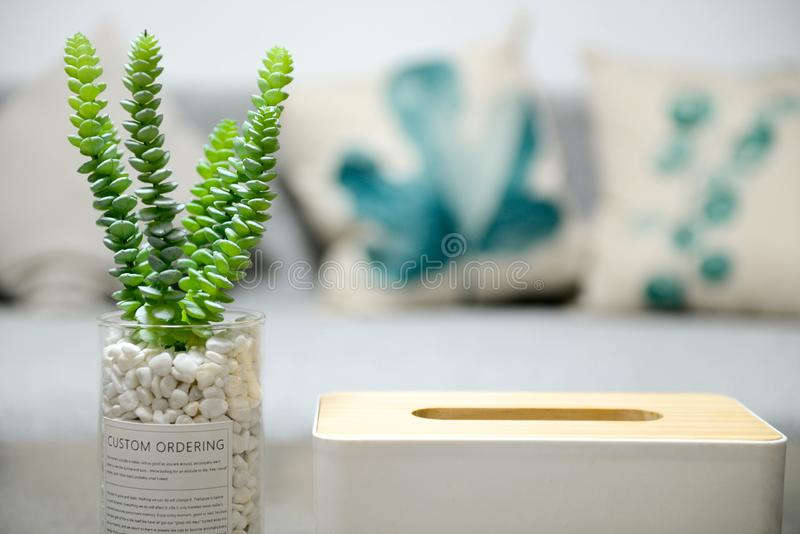 Selective Photo of Green Succulent Plant royalty free stock photos