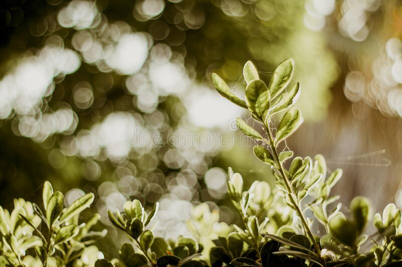 Selective Photograph Of Green Plants At Daytime Free Public Domain Cc0 Image