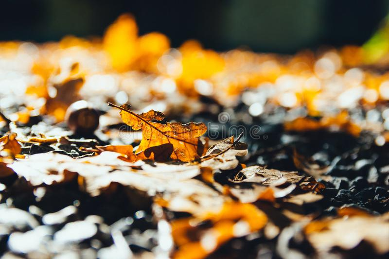 Selective Photography of Brown Dry Maple Leaf on Ground Close-up Photo stock photography